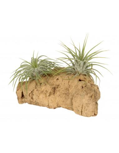 Boombast met luchtplantjes klein