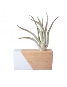 Luchtplantjes houder lichtblauw