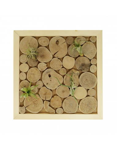 Wanddecoratie luchtplantjes houtplakjes