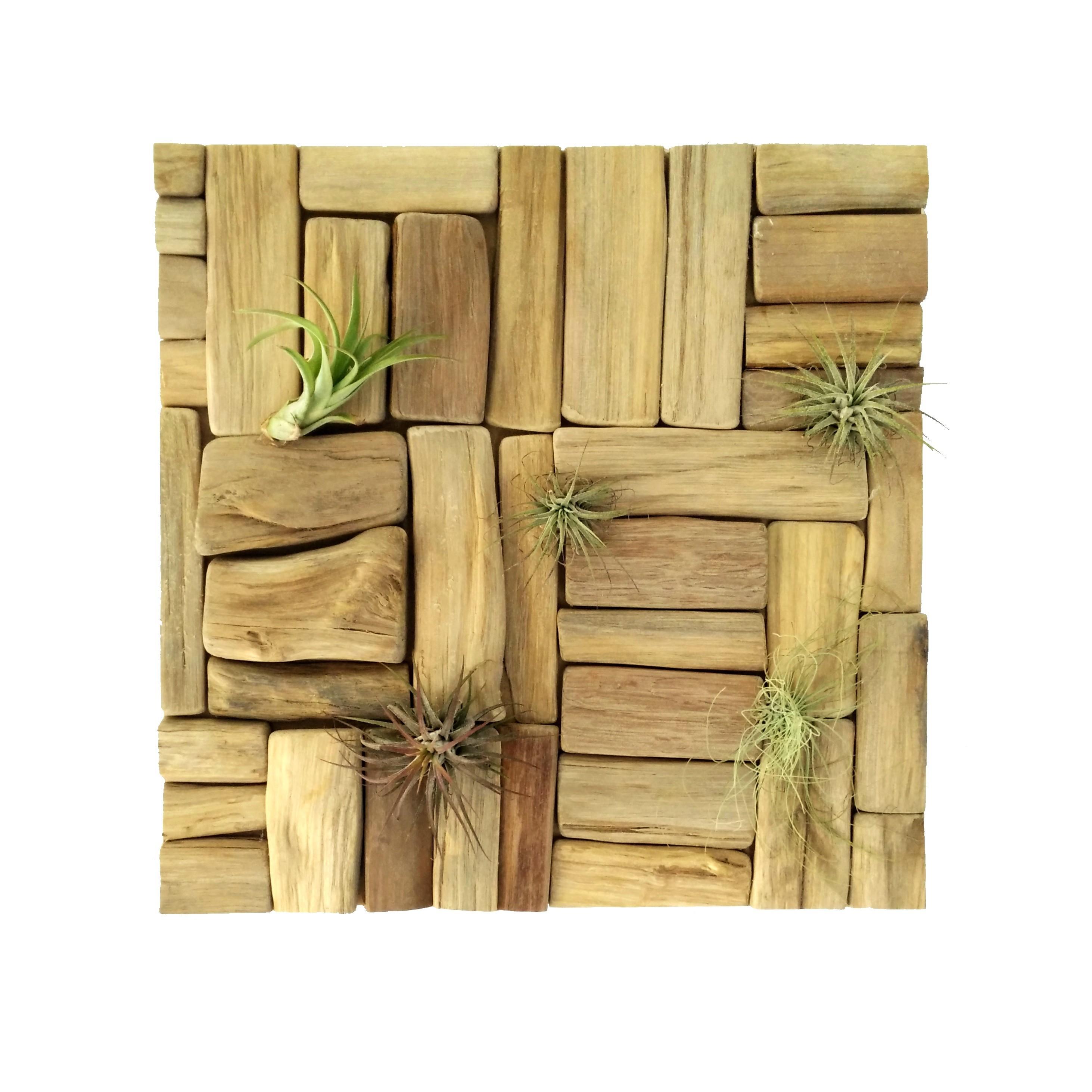 Wanddecoratie Natuurlijke Materialen.Wanddecoratie Luchtplantjes Drijfhout Houten Accessoires